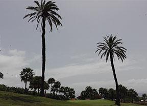 Las palmeras sin nombre