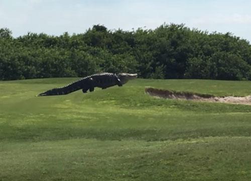 Pánico en el campo de golf