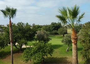 Costa Ballena Golf avanza en el cambio de greenes