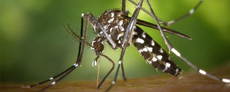 ¿El golf olímpico, en peligro por el virus Zika?